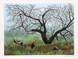 Apple Tree Flock Limited Edition by Allen Friedman