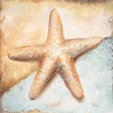 Seashell Collection II Prints by Patricia Quintero-Pinto