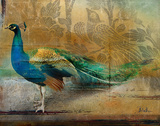 Feathered Dreams I Poster von Patricia Pinto