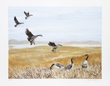 Wild Geese Limited Edition by Allen Friedman