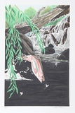 Rainbow Trout Collectable Print by Allen Friedman