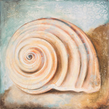 Seashell Collection IV Art by Patricia Quintero-Pinto