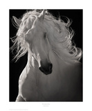 The Lusitano Dancer Print by Robert Dawson