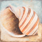 Seashell Collection I Posters by Patricia Pinto