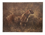 Leopard in the Grass Limitierte Auflage von Nancy Glazier