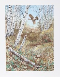 In the Birches Limited Edition by Allen Friedman