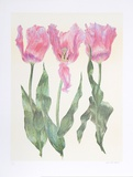 Iris Botanical Limited Edition by Carol Ann Bolt