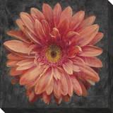Vivid Floral 2: Gerbera Daisy Stretched Canvas Print