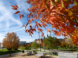 University of Cincinnati - Fall Scene Fotografisk tryk