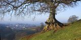 Landscape of tree over River Dart Devon Fotoprint van Charles Bowman