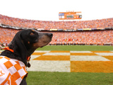 University of Tennessee - Tennessee's Smokey at Neyland Stadium Fotografisk tryk