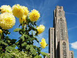 University of Pittsburgh - Flowers and Cathedral of Learning Photographic Print by John Beale