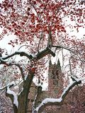 Boston College - Winterberries in the Quad Foto