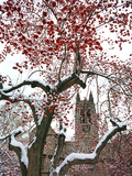 Boston College - Winterberries in the Quad Photographic Print