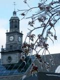 University of Cincinnati - Frozen Buds Photo