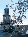 University of Cincinnati - Frozen Buds Photo