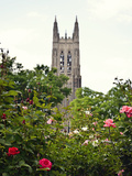 Duke University - Roses in Front of the Duke Chapel Photographic Print