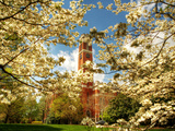 Vanderbilt University - Dogwoods Surround Kirkland Photographic Print
