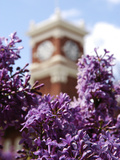 Washington State University - Purple Flowers and Bryan Hall Photo