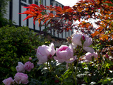 Roses Premium Giclee Print by Charles Bowman