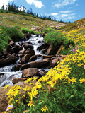 University of Colorado - Colorado Spring Photographic Print