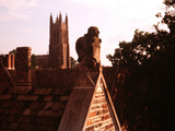 Duke University - Owl Photographic Print