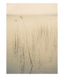Misty Lake, Sweden Photographic Print by Lars Hallstrom