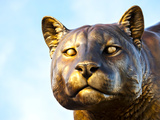 Washington State University - Washington State Cougar Statue Photographic Print
