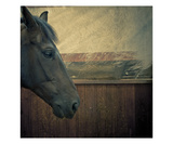 Portrait of a Horse Photographic Print by Lars Hallstrom