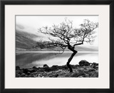 Solitary Tree on the Shore of Loch Etive, Highlands, Scotland, UK Framed Photographic Print by Nadia Isakova