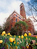 Vanderbilt University - Tulips Frame Kirkland Hall Photo