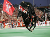 Texas Tech University - The Masked Rider Takes the Field for Texas Tech Fotografisk tryk af Norvelle Kennedy