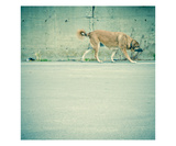 Stray Dog Walking Photographic Print by Lars Hallstrom