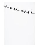 Birds on a Wire Fotodruck von Lars Hallstrom
