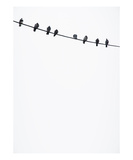 Birds on a Wire Photographic Print by Lars Hallstrom