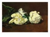Still Life, White Peony Prints by Édouard Manet