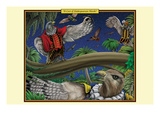 A Cast of Shakespearean Hawks Print by Richard Kelly