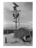 Line Crew at Work in Manzanar Art by Ansel Adams