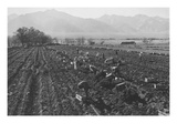 Potato Fields Poster van Ansel Adams