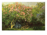 Lilacs in the Sun Premium Giclee Print by Claude Monet