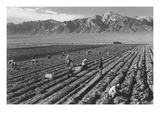 Farm, Farm Workers, Mt. Williamson in Background Print by Ansel Adams