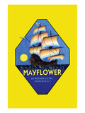 Mayflower Photo