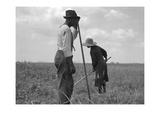 Cotton Sharecroppers Plakater af Dorothea Lange