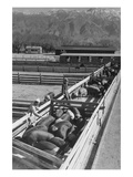Hog Farm Posters by Ansel Adams