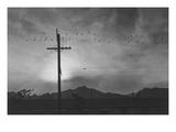 Birds on Wire, Evening Reproduction giclée Premium par Ansel Adams