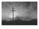 Birds on Wire, Evening Poster van Ansel Adams