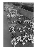 Poultry Farm Posters by Ansel Adams