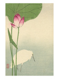 White Heron and Lotus Art by  Baison