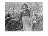 Cotton Picker Premium Giclee Print by Dorothea Lange