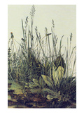 The Large Piece of Grass Posters by Albrecht Durer